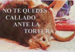 Toro muerto cartel